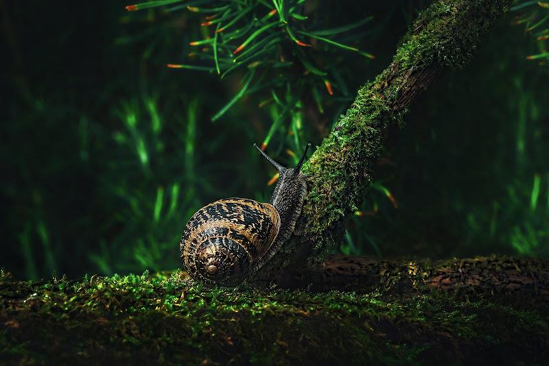 White Italian snail di Info@walteralberti.it