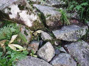 登山道の岩間からオコジョ(中央)