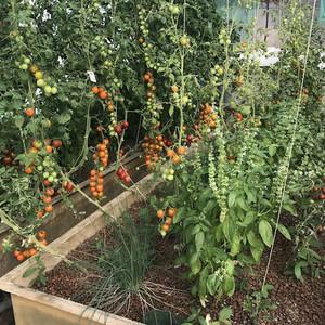 plants verticaux en aquaponie