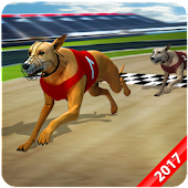Wild Greyhound Dog Racing 2