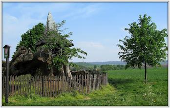 Photo: Semtinská lípa padla v sobotu 27. 5. 2000zde je odkaz:http://www.jicinsko.cz/mistopis/lipa_2.htm