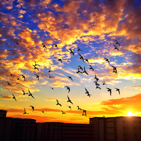 Spread your wings, just fly away. by Dee S. Alkhatib - Instagram & Mobile iPhone ( clouds, orange, sky, purple, blue, sunset, silhouette, yellow, cloudporn, iphone, birds, sun )
