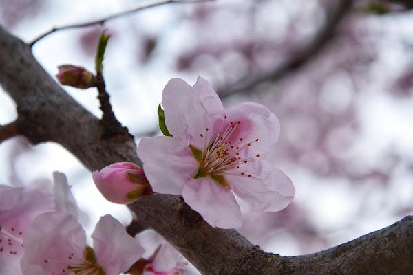 la tenerezza di un fiore di primavera