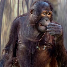 by Stanley P. - Animals Other Mammals