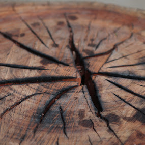 Fissures and Cracks by Nishtha C - Nature Up Close Trees & Bushes ( #bark, #cracks, #concentricrings, #trees, #crevices, #brown )