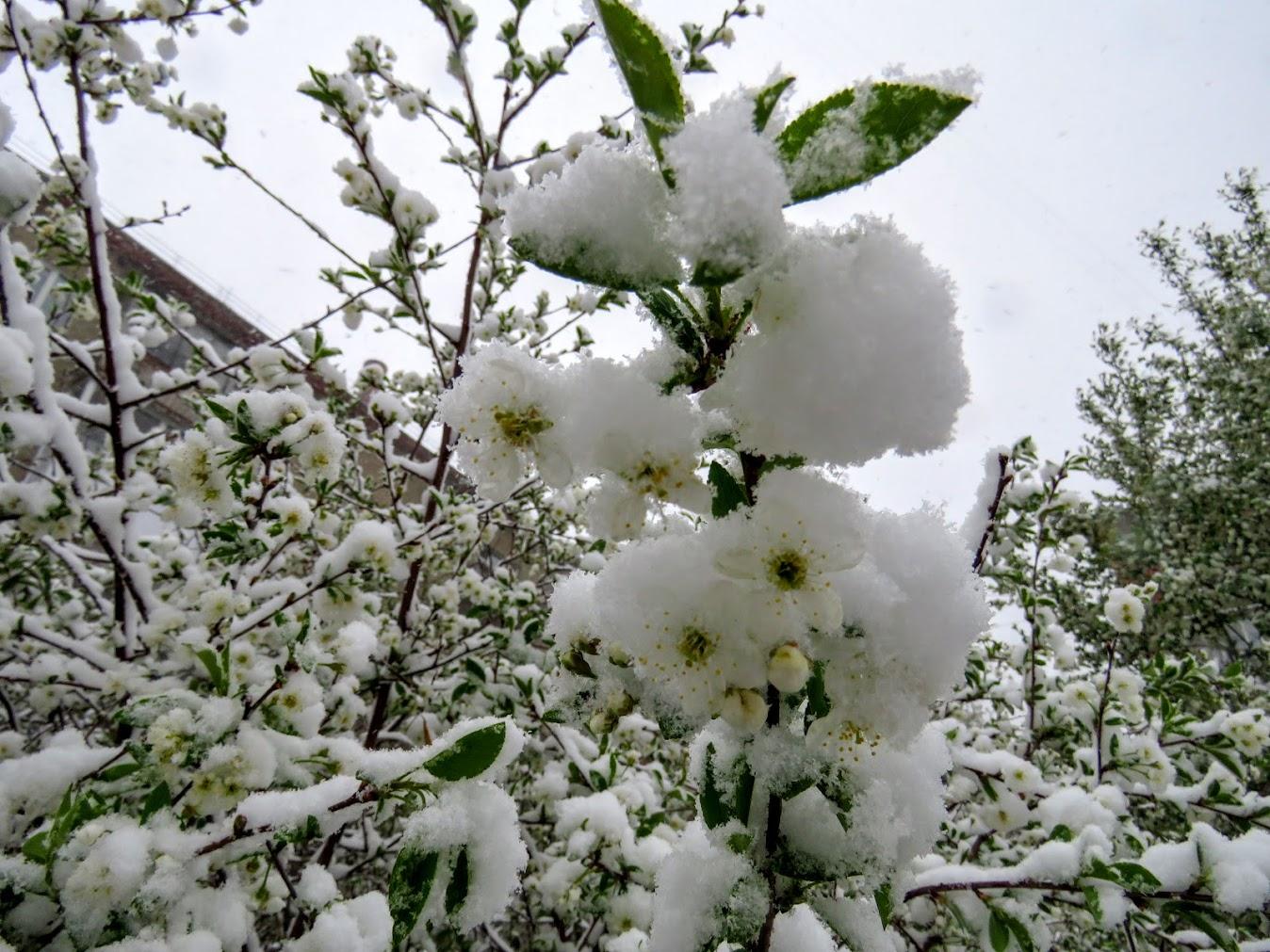 с майским снегом картинки гиф далее под