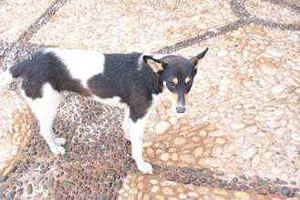 Photo: Dog that followed us along the dock in Essaouira