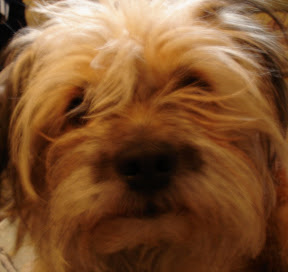 my dog - Shumy