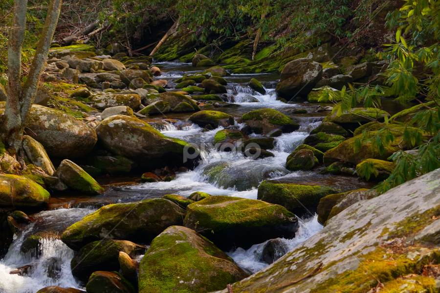 A Stream in the Forest by Beth Collins - Landscapes Waterscapes ( water, stream, national park, park, waterscape, movement, moss, forest, motion, rocks,  )