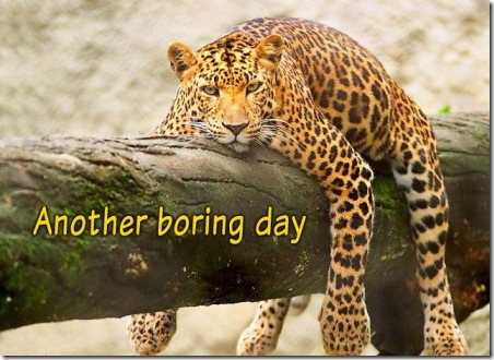 boring-day
