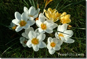 Springweb