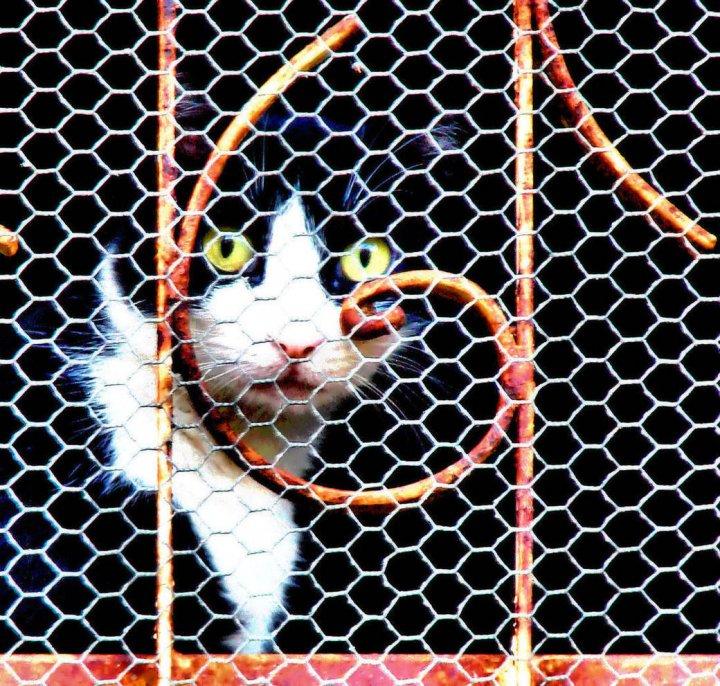 """""""G"""" di gatto di SoleLuna"""