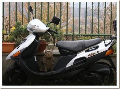 Chi va in moto