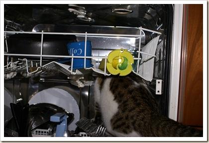 Al lavaggio