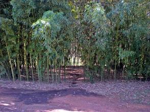 Photo: Secret Garden Within Bamboo