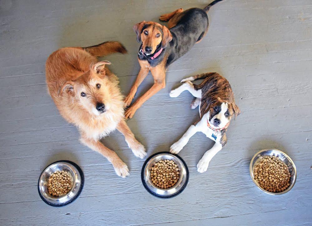 köpek, yer içeren bir resim Açıklama otomatik olarak oluşturuldu