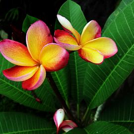 201811090749 by Steven De Siow - Flowers Flowers in the Wild ( flower photography, wildflower, flowers, wild flowers, wild flower,  )