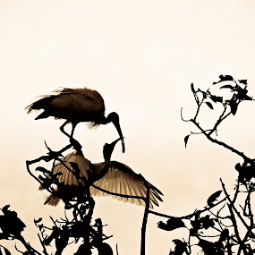 Love by Aditi Dinakar - Animals Birds ( bird, tree, lake )