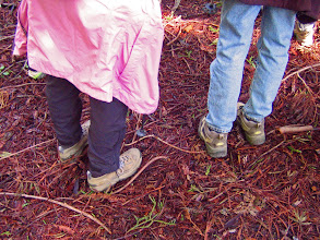 Photo: Walking Across A Redwood Carpet, Zumie's Loop Trail