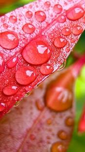 Kapky Deště Živé Tapety - náhled