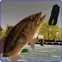 Toad Time Bass Fishing APK icon