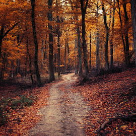 Autumn Walk LXXIV. by Zsolt Zsigmond - Landscapes Forests ( forest, woodland, nature, woods, yellow, colors, path, foliage, fall, leaves, dark, autumn, landscape )
