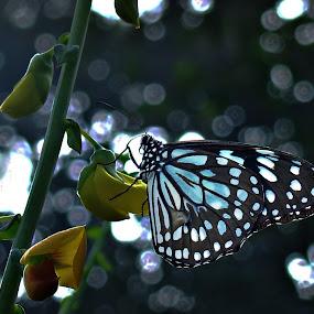 beautyfly by Sayan Basu - Animals Other ( blue butterfly, buterfly, botanical garden, leaves, bokeh, garden, howrah )