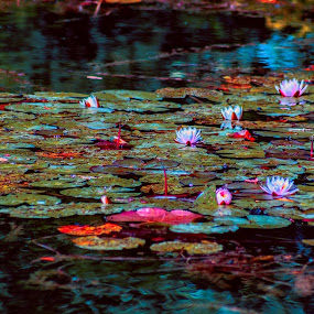 by Antun Lukšić - Flowers Flowers in the Wild