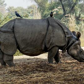 by Mohsin Raza - Animals Other Mammals