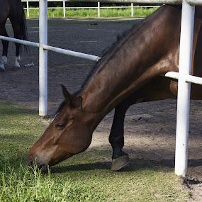 06. Stadnina w Wąsowie - balet głodomora by Marek Rosiński - Animals Horses ( horse, hungry horse, grass, hunger, ballet bow )