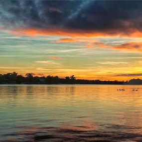 Wildlife on the Lake Sunset by Thomas Vasas - Landscapes Sunsets & Sunrises ( landscapes, sunsets, lakes, wildlife, scenics )