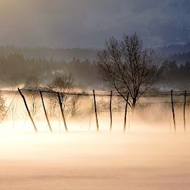 by M Milena Vogrinc - Landscapes Prairies, Meadows & Fields