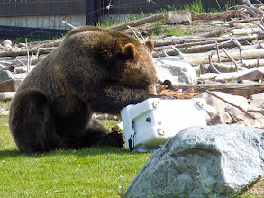 Photo: Also: official bear container test. Also in movie format!