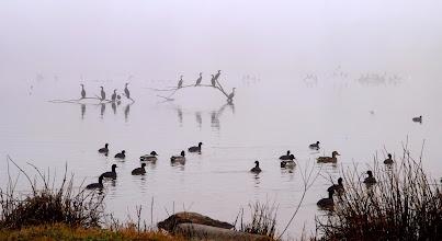 Photo: Double Crested Cormorants