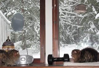 Photo: 10.11.2010 yöllä talvi tuli Laviaan.. joillakin ns. taidekuvaajilla olisi tarvetta vääristää taustametsää epätodellisilla ruskeilla tai muilla kummallisilla sävyillä, jolloin lumen värikin vääristyy..