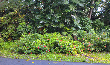 Photo: A flowery foreground and a forested backdrop
