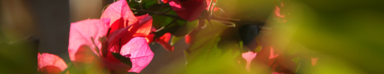 banner_flor.jpg