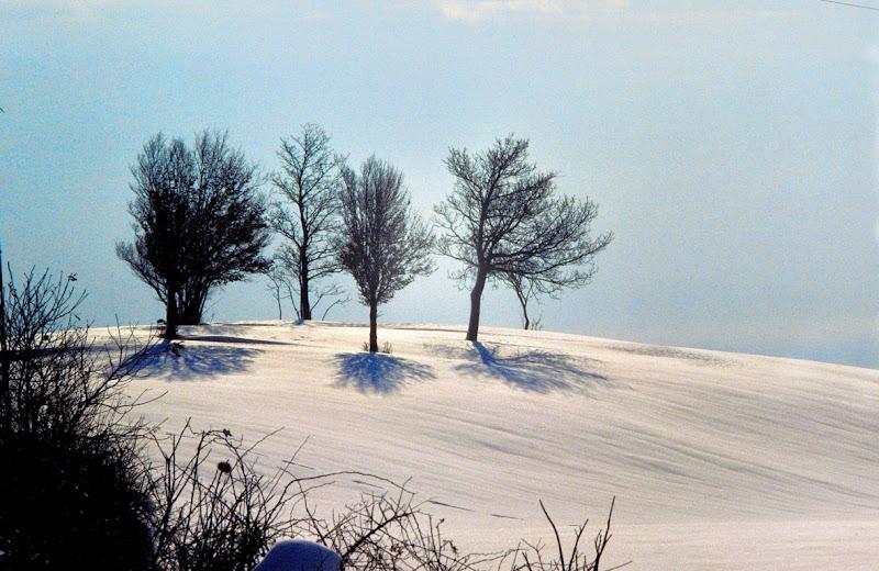 La poesia del paesaggio di Cary