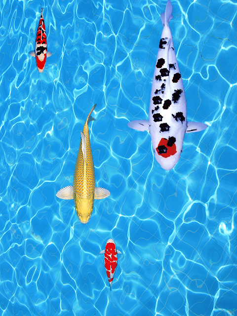 Koi fishing game android apps on google play for Koi fish games