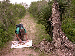 Photo: Beating on a Spanish Dagger along Jaguarundi Trail