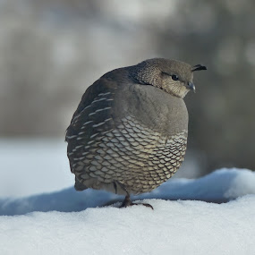 My toes are cold by Charlene Cadman - Animals Birds