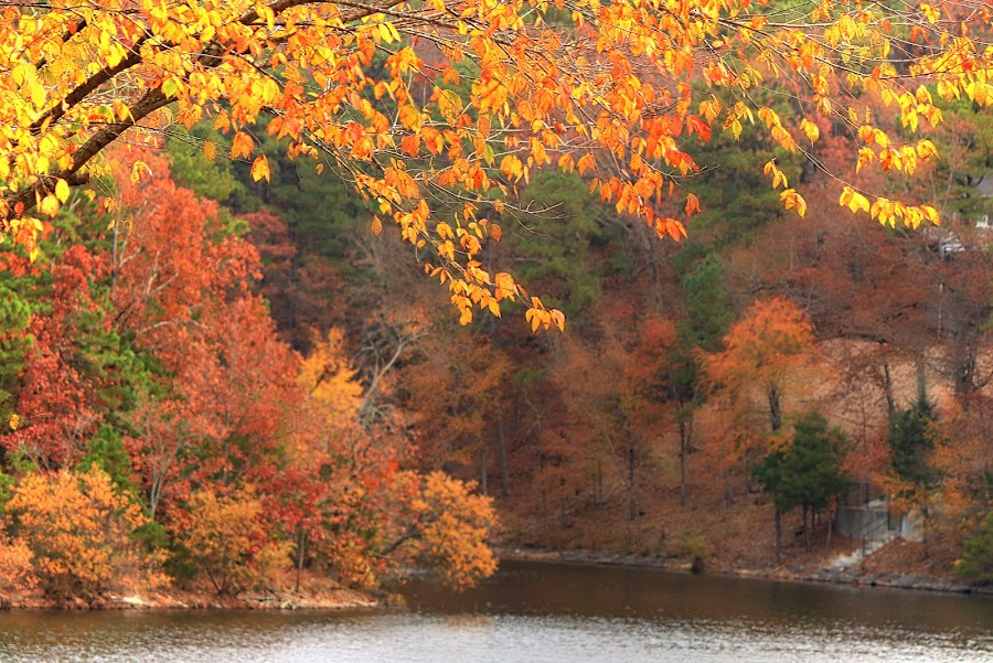 AUTUMN GLORY by Dana Johnson - Landscapes Forests ( autumn, fall, trees, forest, landscape )