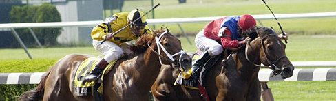 best uk horse racing tipsters