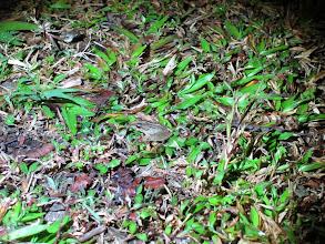 Photo: Tiny frog