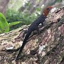 Gecko cabeza amarilla