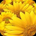 Flowers rainbow. LiveWallpaper icon