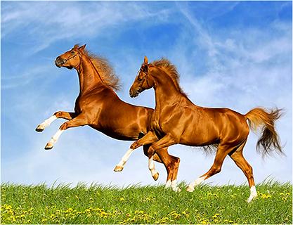 cheval jeux puzzle gratuit capture dcran