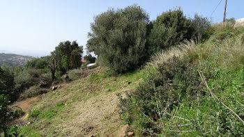 terrain à Propriano (2A)