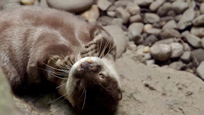 Otter Under the Weather thumbnail