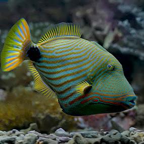 by Joel Mochammad - Animals Fish